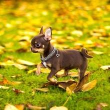 Украшения для домашних животных со стразами ошейник для домашних животных золотой блестящий ошейник для собак Модный милый ошейник для собак