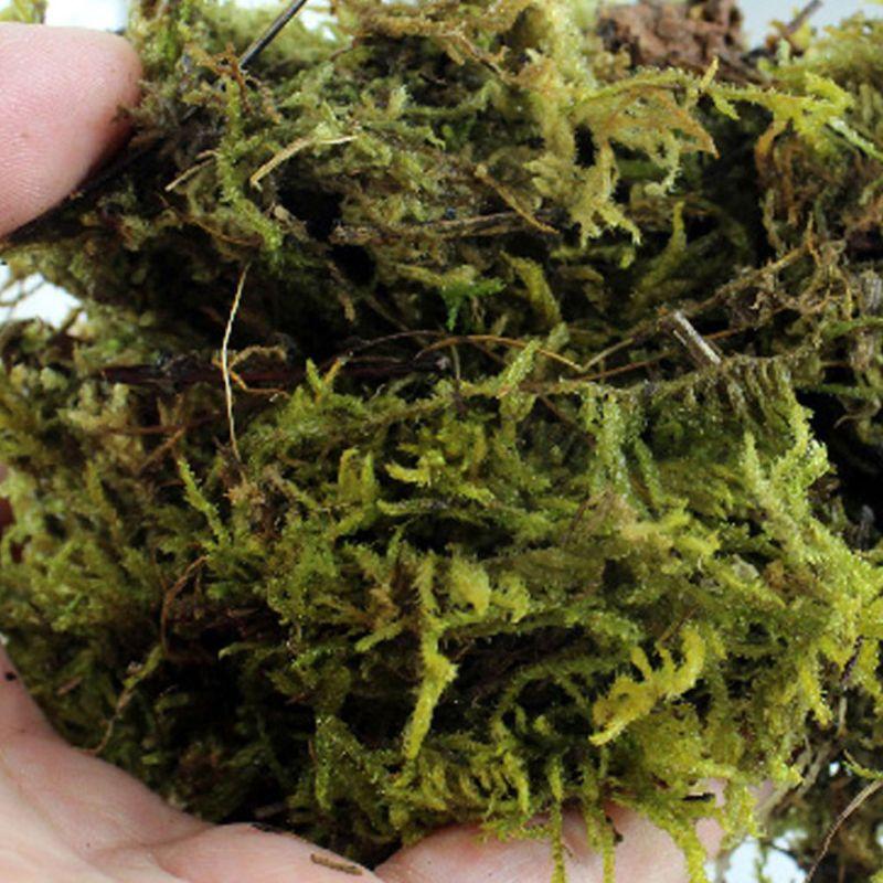 2019 New 100g Natural Terrarium Moss Reptile Turtle Moss Substrate Habitat Decoration Pet Supplies