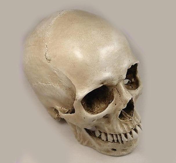 1: 1 human skull model life size resin skull model art class model delicate human skeleton model figure decoration ornament