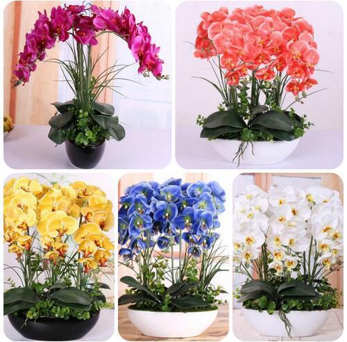 200 piezas Phalaenopsis orquídea plantas hidropónicas Bonsai plantas para cuatro temporadas plantas en maceta * jardín Jardin Flores Sementes