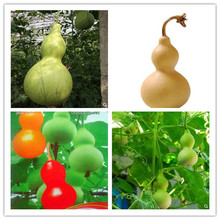 20 Pcs New Bottle Gourd Bonsai Big Wine Spoon Lagenaria Siceraria Calabash Vegetable For Home Garden