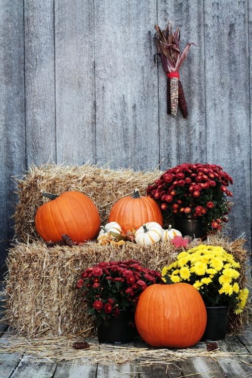 HUAYI pumpkins and chrysanthemums on a bale of straw Photography Newborn Backdrop XT4197