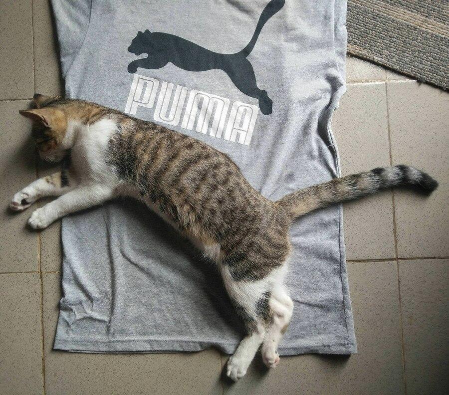 迷路猫的猫之APP框架样式