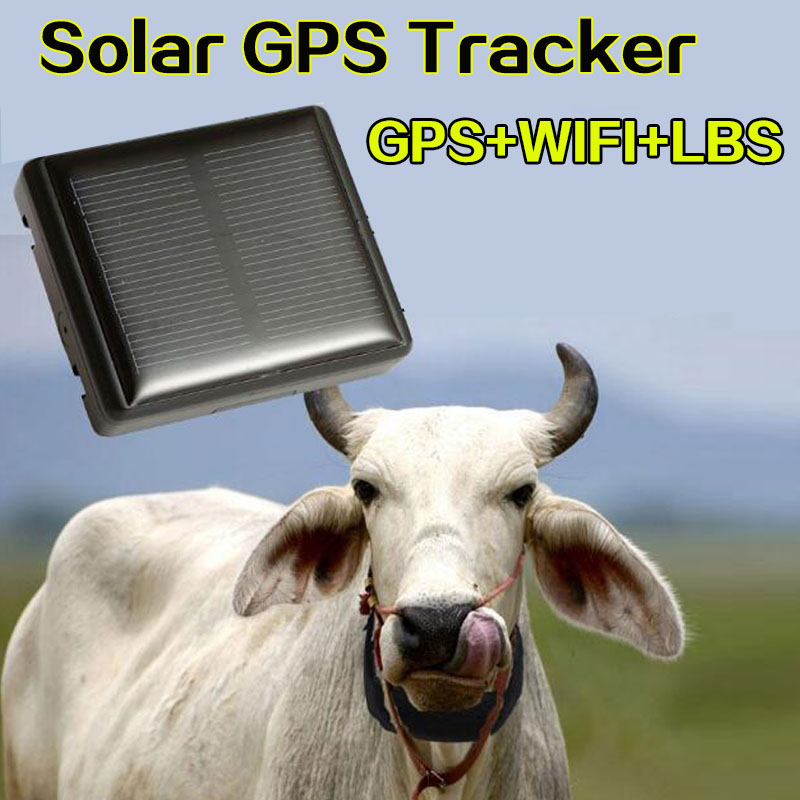 RF-V26+ Waterproof IP66 Mini Solar Gps  Cow  Cattle Animal Long Standby Time Gps Tracker  Lifetime Free Use Platfrom Support App