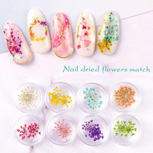 Dried Flower Nail Art Decorations 3D Real for Gel Tips DIY Manicure Tools Decoration