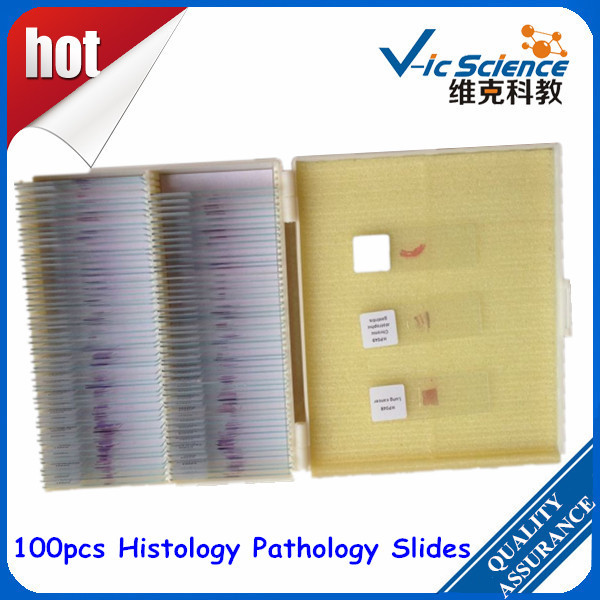 Hot Sale 100pcs Histology Pathology Slides hot sale 2x 250g 100