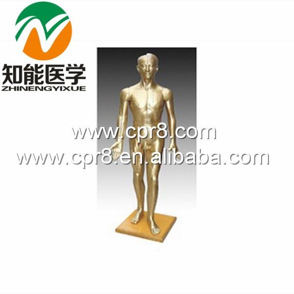 BIX-Y1002 Human Acupuncture Model(Bronze) 178CM G037 bix y1002 human acupuncture model bronze  178cm wbw332
