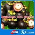 1 Pack High Quality Mangosteen 10:1 Extract 500mg x 100caps free shipping