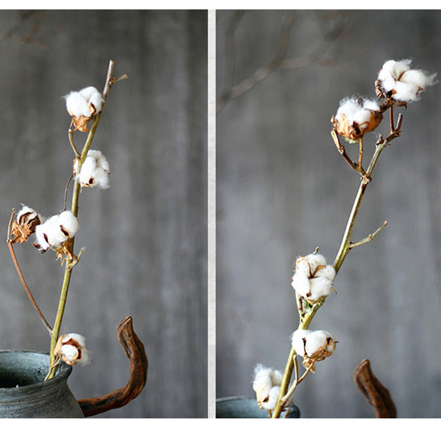 3 7 flowers on a branch netherlandish cotton branches natural dried 3 7 flowers on a branch netherlandish cotton branches natural dried plant white flower with mightylinksfo