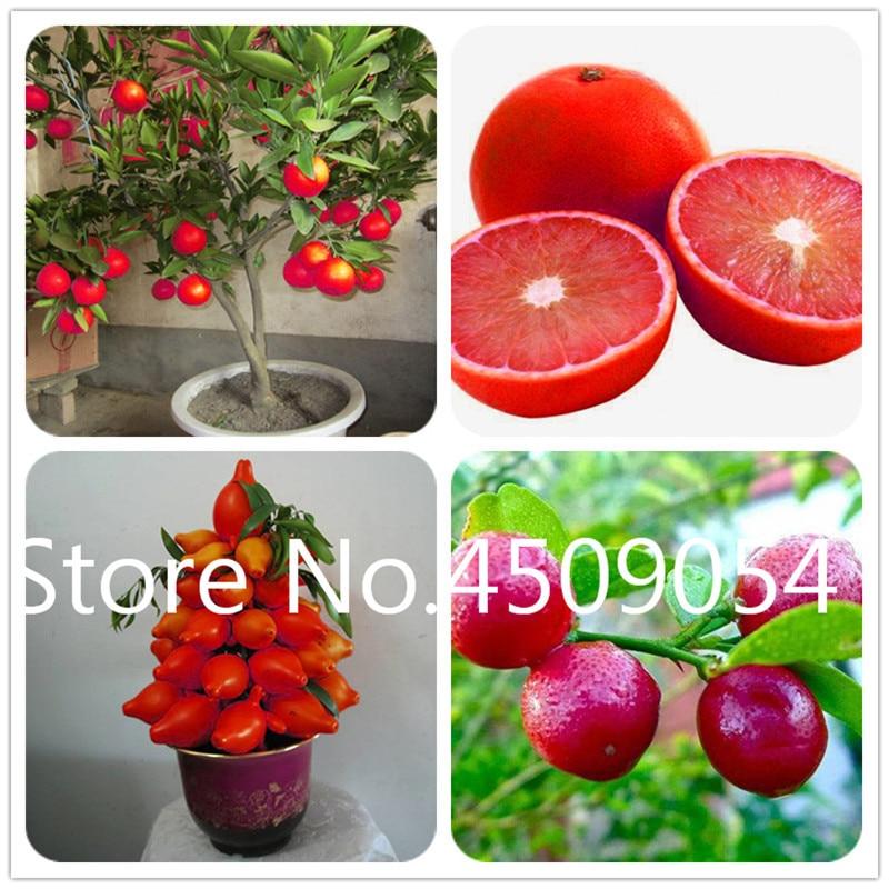 100 Pcs Seeds Cherry Mini Tree Organic Fruit Bonsai Delicious Plants Garden NEW