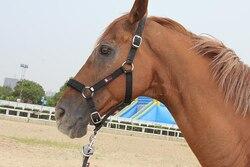 Утепленные Верховая езда оборудования Конный поставляет многоцветные лошадь Недоуздок с Подушки Лошадь Седло для лошади Интимные аксессу...