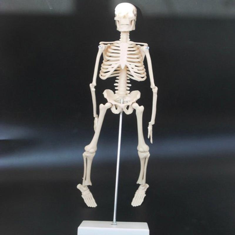 45 cm Menschlichen Pädagogisches Ausrüstung Biologie Anatomie ...