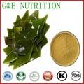Alta Qualidade Extrato de Alga Laminaria Japonica com Fucoxanthin 40% UV
