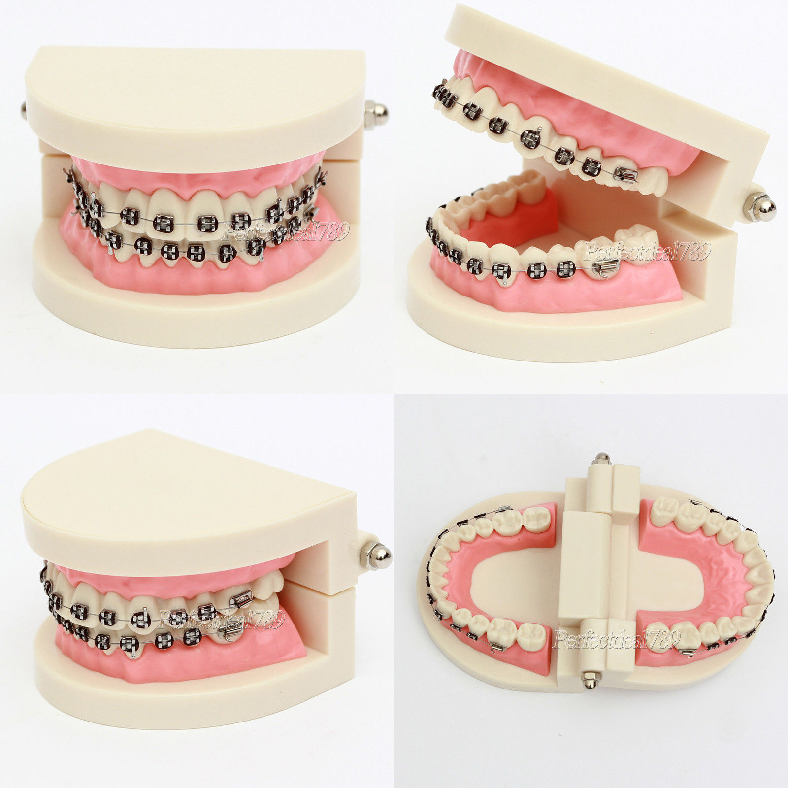 Dental Teach Study Standard Typodont Demonstration Teeth Model With Bracket 1 Pc 2016 new arrival dental orthodontics typodont teeth model metal brace bracket typodont with arch wire toiletry kits