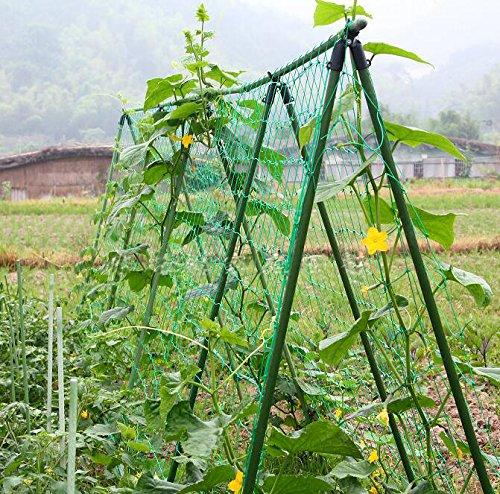 vegetais e frutas, videira e veggie treliça rede planta de escalada net