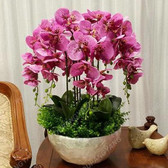 100 pcsseeds/Sacchetto Idroponica Orchidea bonsai Fiori Al Coperto piante Quattro Stagioni Orchidee Phalaenopsis bonsai Per La Casa Gard