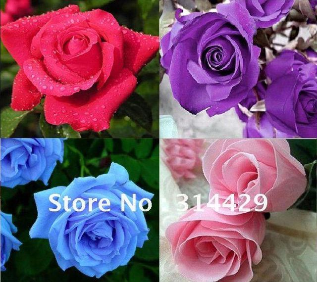 Wholesale - 30%off - 100pcs Mix Color Rose Seeds (Red/Pink/Green/Blue/Yellow/Purple...) Free Shipping DIY