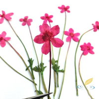 10 PCS Dried Water Lotus With Branch Specimen Wild Natural Pressed Flower Dried Plant Handmade Environmental
