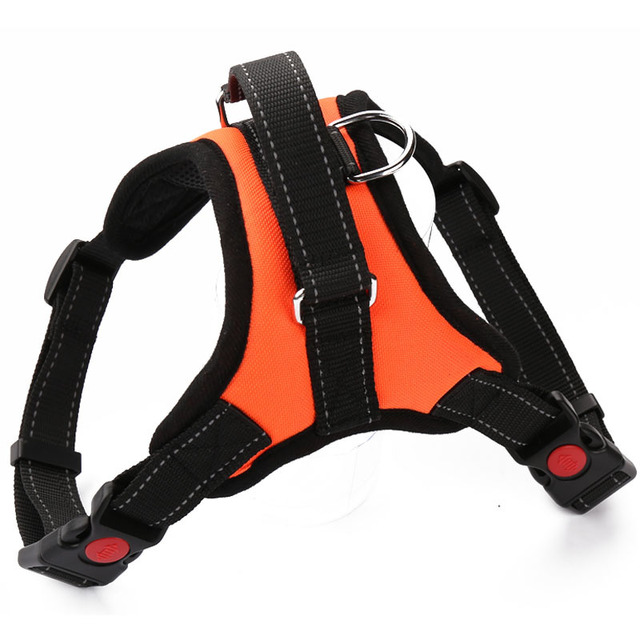 Dog's Harness