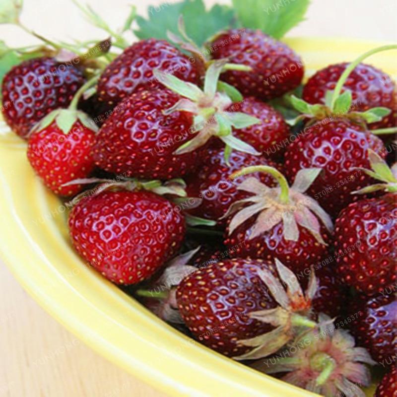 Strawberry Seeds Rare Color Purple Red Strawberry Seeds Cherry Berry Fruit Seeds Decilious Fruit Home Garden 100 Pcs