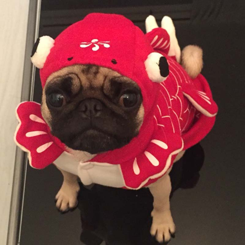 Funny Halloween pet cat dog Fish goldfish costume cosplay clothes winter warm small dog puppy yorkie jacket jacket clothing-in Dog Coats u0026 Jackets from Home ... & Funny Halloween pet cat dog Fish goldfish costume cosplay clothes ...