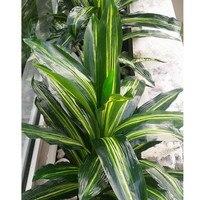 70cm Large Latex Artificial Brazil Bird Plant Tree Wedding Christmas Home Decor Green F514