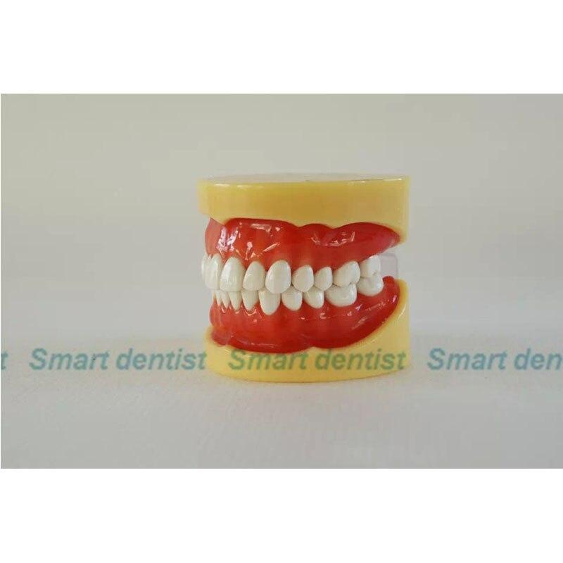 2016 KQH-H330/S5A, modèle de mâchoire dentaire standard A, dents blanches avec gomme, modèle dentaire, éducation, médecine - 3