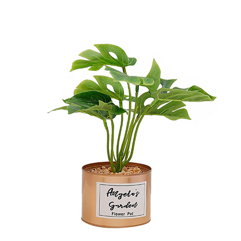 Potted House Plants For Sale on potted plants projects, potted plants design, potted plants to repot, potted plants business, potted flowering plants, potted plants outdoors, garden plants sale, potted plants flowers,