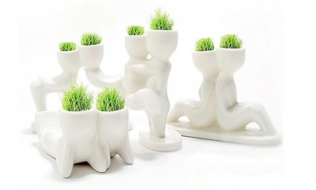 White Man Grass Planting Mini Grass Potted Creative Office Miniature  Landscape Plants Fashion Seeds Indoor Plants
