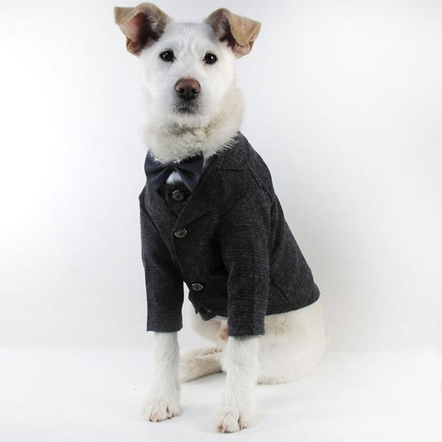 Bigeyedog Dog Suit Male Dog Clothes Wedding Costume Party Pet Clothing  Poodle Pug French Bulldog Clothes Dropshipping Pet Coat-in Dog Coats &  Jackets ...