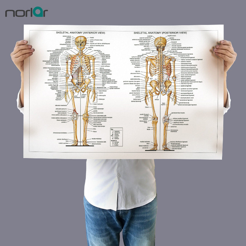 Online-Shop Leinwand Malerei Wandkunst Bild Menschlichen Anatomie ...