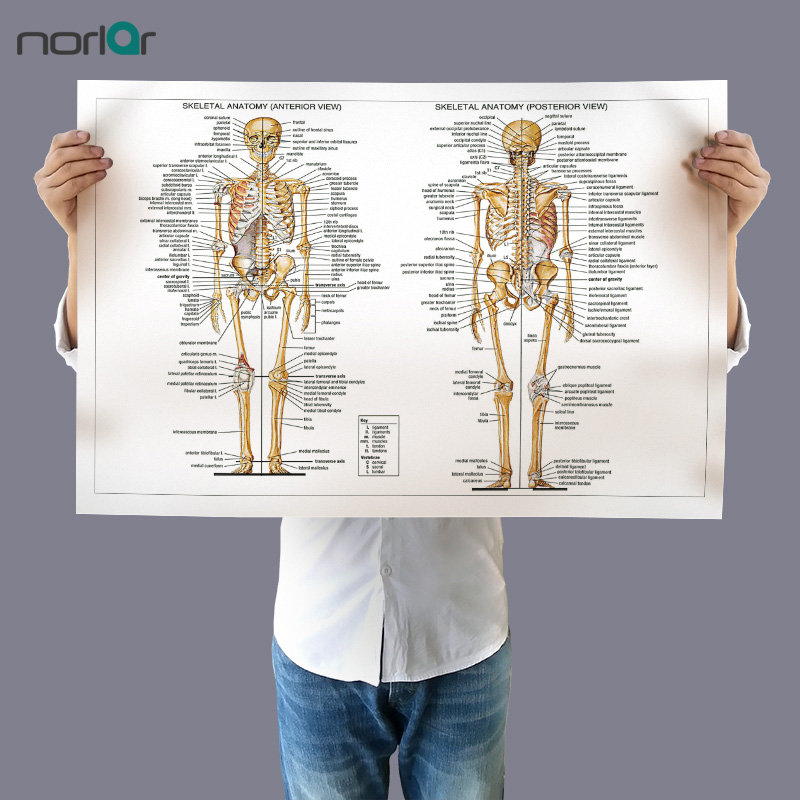 Canvas Painting Wall Art Picture Human Skeletal Anatomy Bones Of The Body Poster Print Body Map Pictures for Medical Education