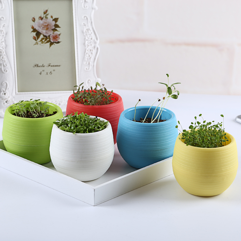 5pcs lot diy candy pot with bonsai seeds 5 styles for Cache pot design interieur