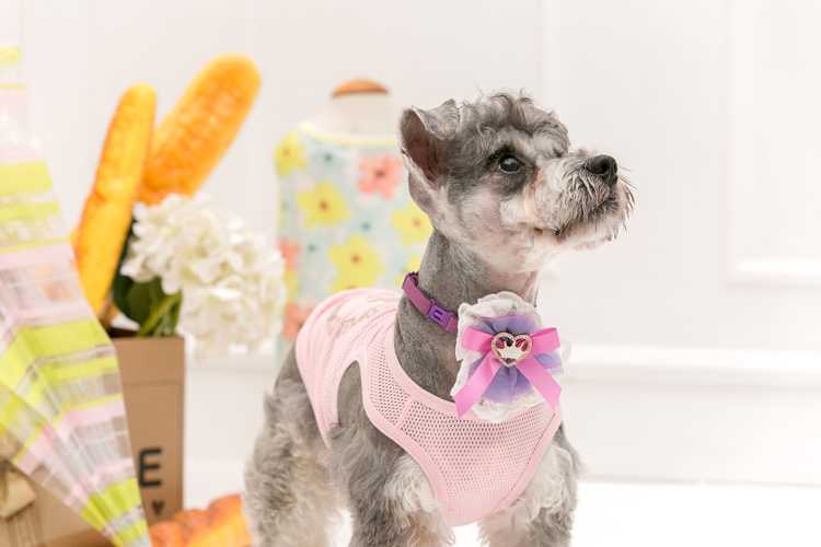 Nuevo hilado de la Nieve de La Cinta empate mascota Super lindo perro de mascota