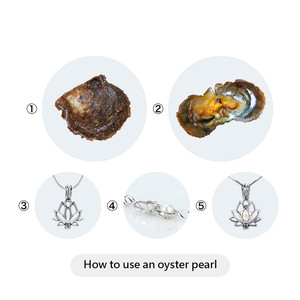 Image 5 - CLUCI 50pcs 8 8.5mm Akoya Pearls in Oysters Round Single Packaged Genuine Akoya Pearl Beads  Quality Akoya Pearl Oyster WP349SB