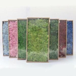 Image 5 - Artificial plants eternal life moss / Garden home decoration wall DIY Flower material Mini Garden Micro Landscape Accessories
