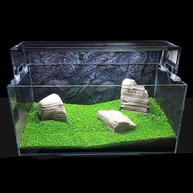 Agua acu tica hierba planta acuario para peces peque o for Peces marinos para acuarios pequenos