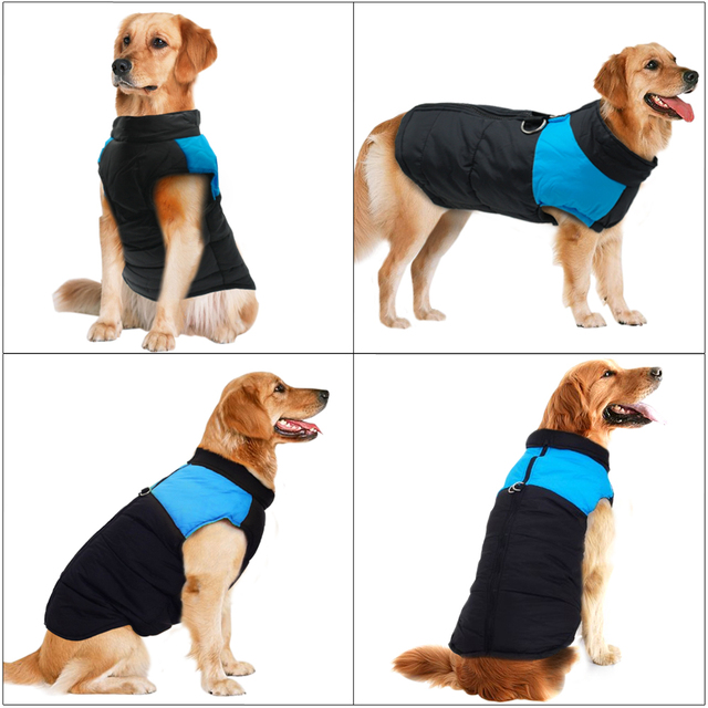 Large Dog Coat Ropa Perro  3