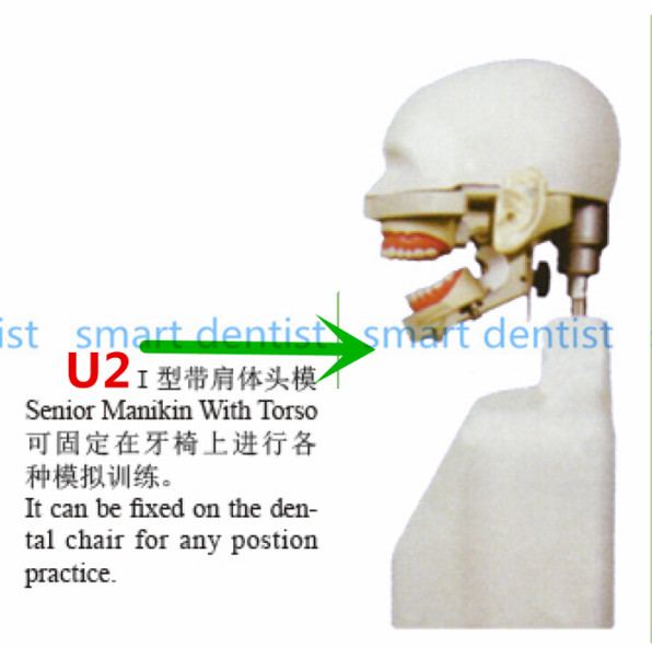 2017 New Senior Manikin With Torso Apply to dental simulation training of teeth scaling  ...