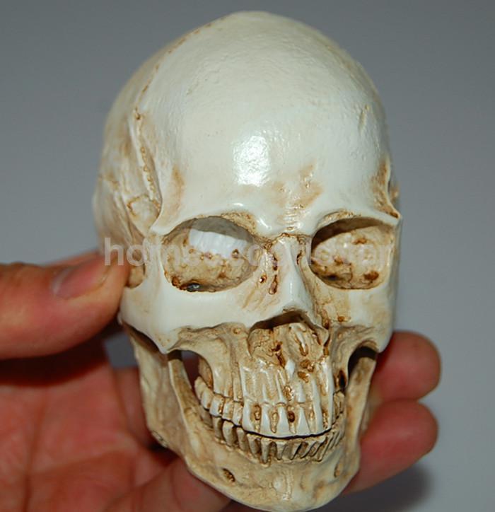 online get cheap human skeleton replica -aliexpress   alibaba, Skeleton