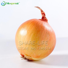 New Hot Delicious 100pcs Giant Onion Seeds Organic Vegetables For  Interest DIY