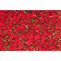 Customized 3D red roses flowers photography backdrops for newborn & wedding love party photo studio portrait background F 1603