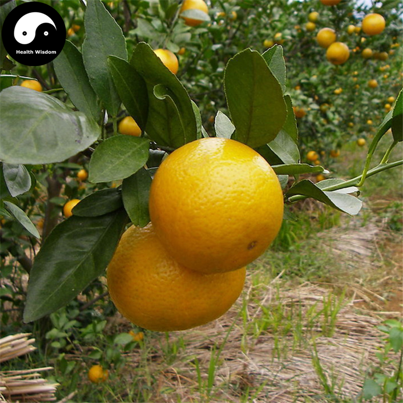 Buy Gong Orange Fruit Semente 50pcs Plant Citrus Tree For Fruit Sweet Orange