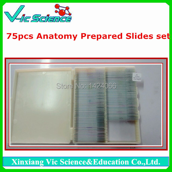 75pcs Human  Anatomy Prepared Slides set high quantity microscope embryology prepared slides