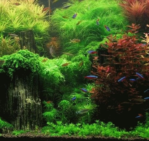 Popular live pond plants buy cheap live pond plants lots for Plants that live in a pond