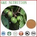 900g de Alta qualidade Prunus Africana/Extrato de Pygeum topengii com frete grátis