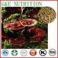 A base de hierbas medicina hongo reishi cápsulas, 500 mg x 200 unids