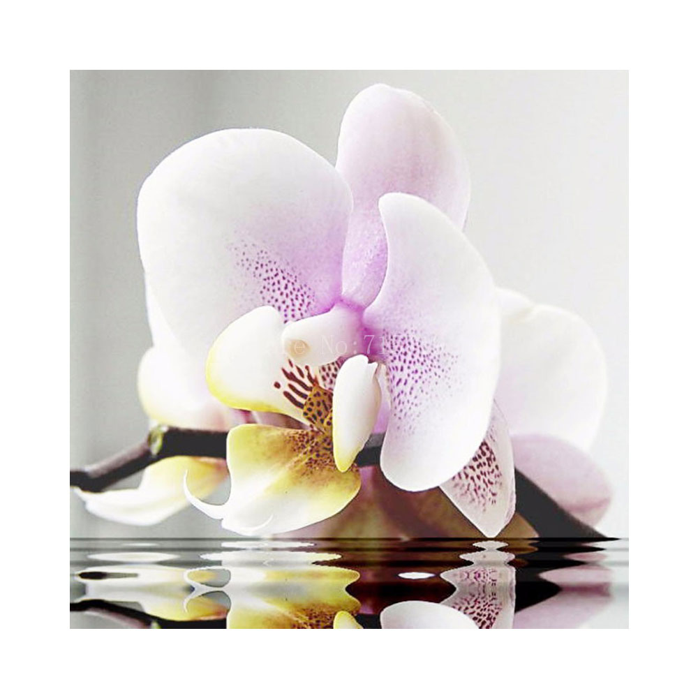 en primera fashion natural the orchid diamond flowers p blush white collection