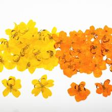 250pcs Pressed Dried Cassia Butterfly Flower Filler For Epoxy Resin Jewelry Making Postcard Frame Phone Case Craft DIY
