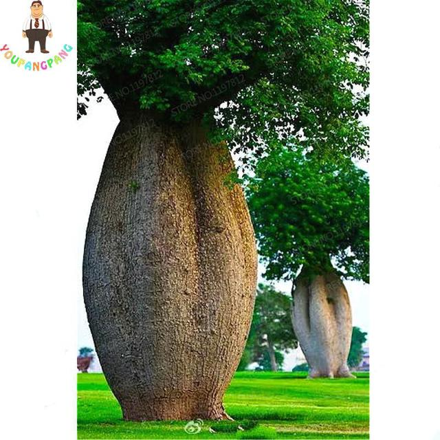 100% натуральная 10 шт. высокого качества Baobab карликовые деревья Редкие Тропические экзотические растения садовый многолетник бонсай красивые огромные ствол растения